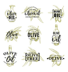 olive oil icons with leaves and bottle vector image