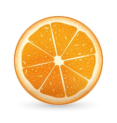 Sliced Orange vector image