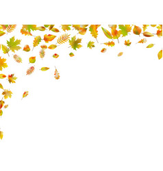 Falling autumn leaves eps 10 vector