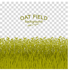 Green oat field on checkered background vector