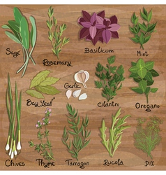 Herbs set vector image