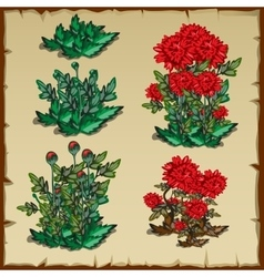 Stages of growth carnation planting and withering vector image