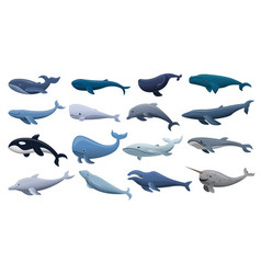whale icon set cartoon style vector image