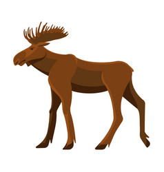 Wild adult moose with big branchy horns and strong vector