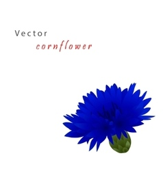 Template card with cornflower vector image