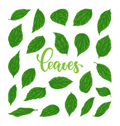 beautiful set collection with green leaves vector image