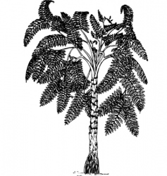 plant lyginopteridopsida vector image