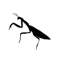 Praying mantis insect black silhouette animal vector