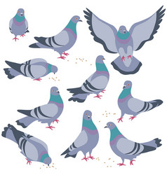Set of gray doves in motion vector
