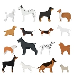 Dog breed vector image