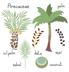 Arecaceae plants set vector