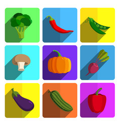 Colorful vegetable icon set on bright background vector