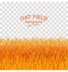 Golden oat field on checkered background vector