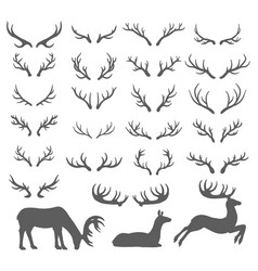 hand drawn sketch of deer horns vector image