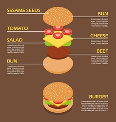 Isometric of Burger ingredients infographic vector