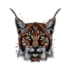 Lynx head portrait from a splash watercolor vector