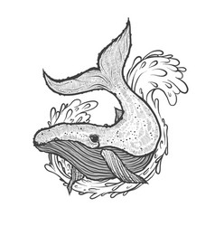 hand drawn of whale with wave vector image