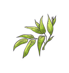 bamboo green leaves - of vector image
