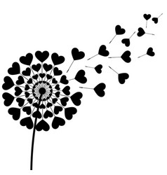 Black fluff dandelion heart shape on white vector