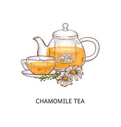 Chamomile tea in teapot and cup with flowers vector