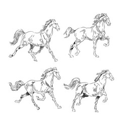 horse collection vintage vector image