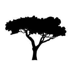 silhouette acacia icon tree flora vector image