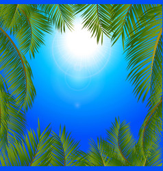 tropical palm trees frame over blue sunny sky vector image