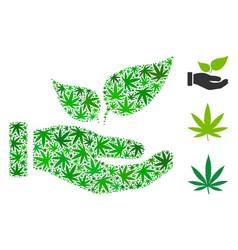 eco startup hand composition of weed leaves vector image