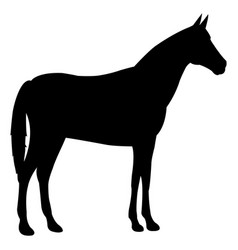 horse standing black icon vector image