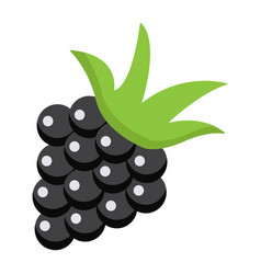 Blackberry flat icon fruit and diet vector