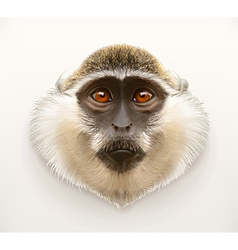 Monkey head realistic vector image