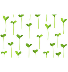 Seedlings field growing young plant shoots crops vector
