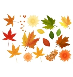Beautiful colourful realistic autumn leaves and vector image vector image