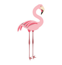 isolated cute flamingo vector image
