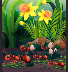 Nature scene with ants and mushroom vector