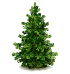 pine tree vector image vector image