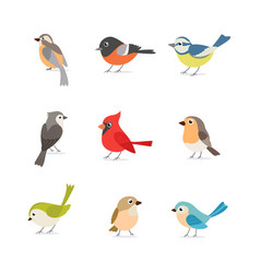 printset colorful birds isolated on white vector image