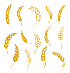 Set of simple wheats ears icons and grain design vector