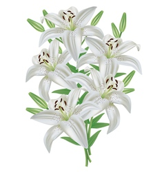 Lily flower bouquet isolated on white background vector image