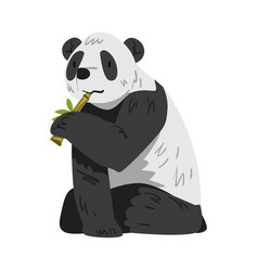 cute panda bear sitting and munching on bamboo vector image