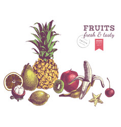 hand drawn juicy fruits colorful border vector image