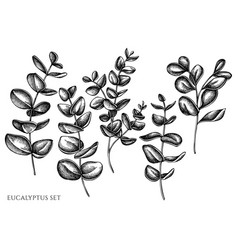 set hand drawn black and white vector image