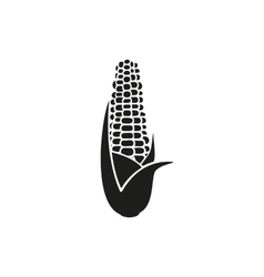 Corn on white background vector image