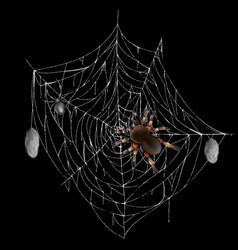 Dangerous poisonous spider on web realistic vector