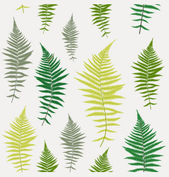 fern leaf fern leaf seamless pattern vector image