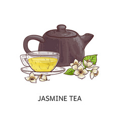 jasmine tea - hot yellow beverage in glass cup vector image