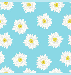 white chrysanthemum on blue background vector image
