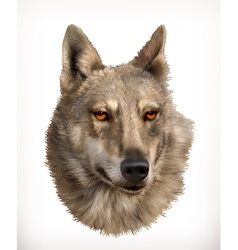 Wolf head realistic vector