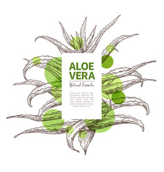 Aloe vera sketch design template label vector