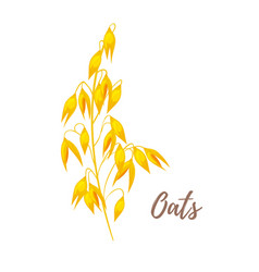 cereals - oats vector image